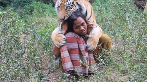 老外和老虎生活了5年,这天老虎突然野性大发,网友:伴君如伴虎
