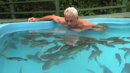 老外在泳池养了100条食人鱼,随后跳了进去,结局出乎意料