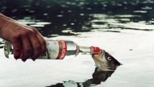 男子在船上喝酒,转头发现条鱼张着嘴,给它喝之后不得了