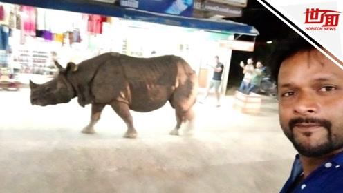 胆大包天!犀牛晚间冲上街头散步 路人淡定围观还跟它自拍