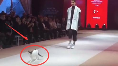 小猫咪误闯时装展T台,亲自教模特走正宗猫步,场面太搞笑!