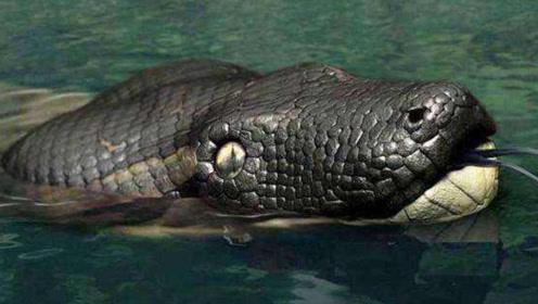 地球上最大的蛇,重一吨长20米,吃条大象还不够塞牙缝
