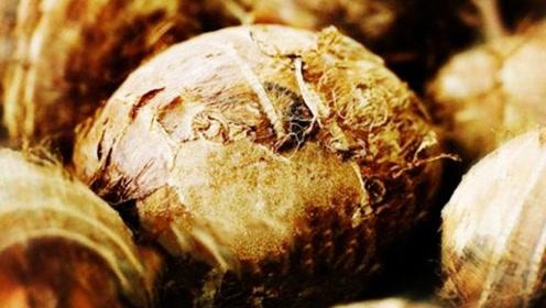 """秋天吃这""""素三宝"""",胜过冬虫夏草!比肉强多了!"""