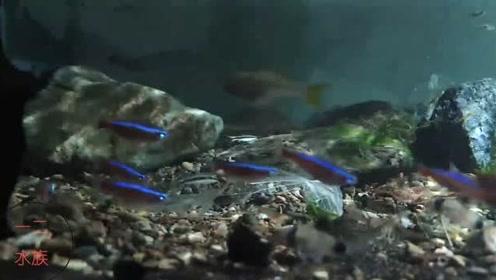 鱼缸环境有点神秘,喜欢软水的观赏鱼,硬是被鱼友放进石头鱼缸