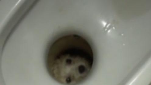 女子上厕所发现马桶里有双眼睛,匆忙报警,警察赶来后哭笑不得