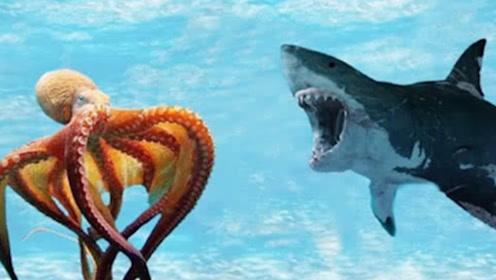 """为什么小章鱼一出生,章鱼妈妈就会选择""""自杀""""?真相太令人感动"""