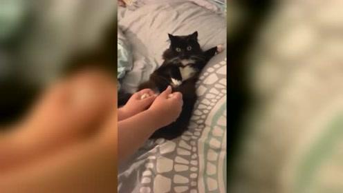 美国加利福尼亚 猫第一次经历地震吓成表情包