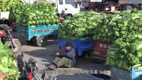 辽宁白菜滞销堆满地,2毛钱一斤无人买,农民苦坐急得干瞪眼