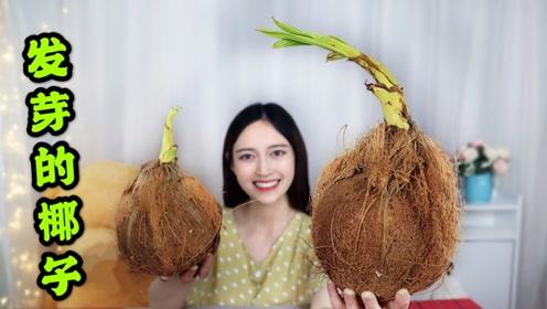 """发芽的椰子也能吃?试吃传说中的""""椰宝""""口感果然不一般!"""