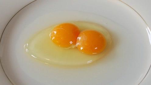 """""""双黄""""鸡蛋孵化,能孵出两只小鸡吗?"""
