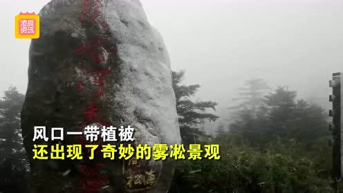 湖北下雪了!神农架迎来今年第一场雪