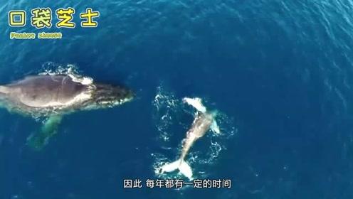 在那么多海洋生物中,为什么鲸鱼的体型会那么大?看了就知道
