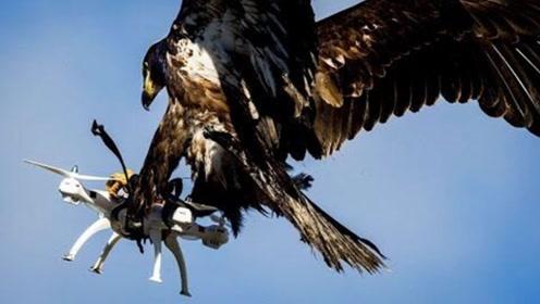 无人机航拍雪山,被老鹰突然抓走!摄像头全程记录了下来