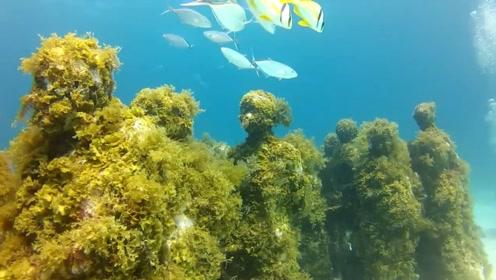 """海底藏着一个""""坟场"""",一群人一动也不动,男子第一次潜水吓懵了"""