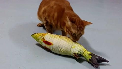 喵星人:这是什么鬼?看起来明明是条鱼,可是吃起来味道不对啊!