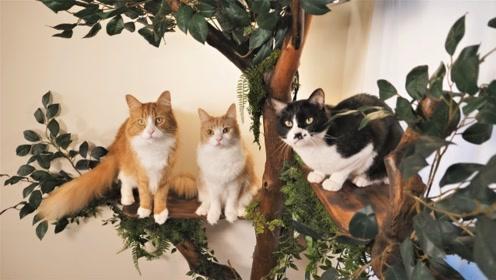 建造供猫咪玩耍的景观树,成品也太惊艳了!