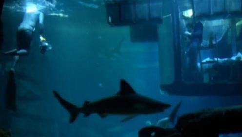 全球最可怕的酒店,免费和35条食人鲨共眠,有心脏病的给钱也不让进
