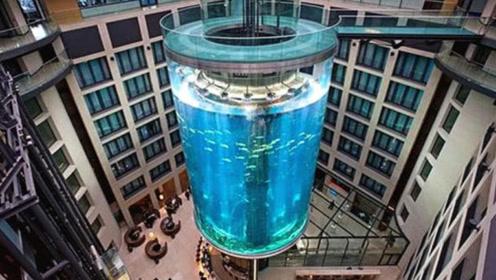 造价近1亿的人民币的鱼缸,由透明的玻璃做成,拥有鱼类有56种!
