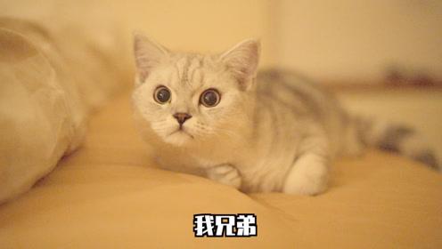 猫咪塔可晚上睡不着乱嚷嚷,跟妈妈看电影又嗨疯了!
