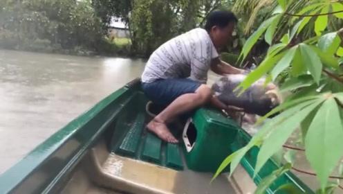 随手撒一网,突然水中巨物翻腾,意外收获一条罕见的鲤鱼王