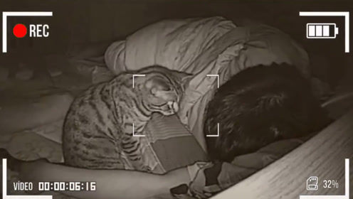 主人长期和猫一起睡,有一天查看监控,发现了诡异的画面