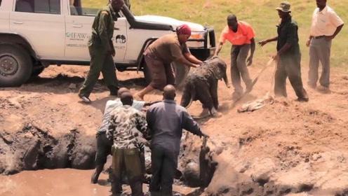 一群人从泥坑中救起小象,象妈妈回头感谢,人与动物奇妙的共同性
