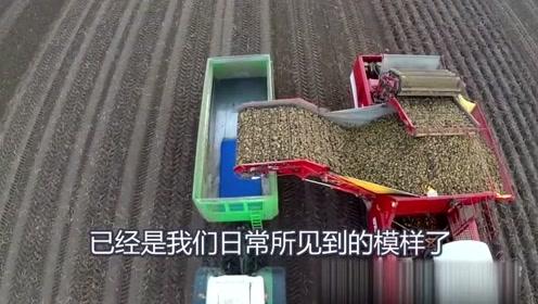 自动化蔬菜收割机 ,一天能收200亩,这下菜农轻松了!