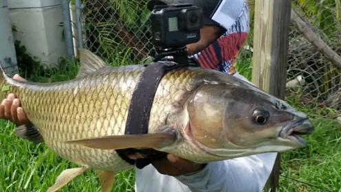 鱼眼中世界是怎样的?小伙在鱼身绑上摄像机,网友:从未体验过