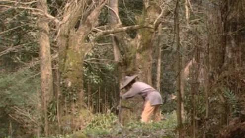 祖坟上长出一棵树,老农砍掉后,道士:龙气已露,孙子必称帝!