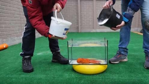 小伙将龙虾放进玻璃钢后,倒入可乐曼妥思,结果下一秒场面就失控了!