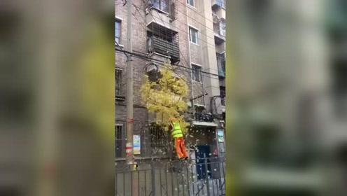 如果环卫工不这样做,真不知道秋天该怎么打扫卫生