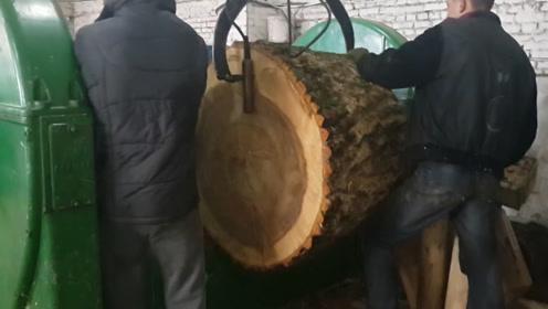 这么粗的木头不车珠子可惜了?错,做成胶合板才能更赚钱
