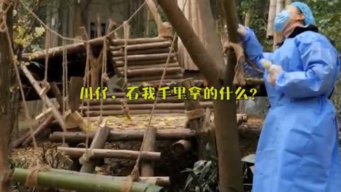 奶妈:川仔,看我手里拿的什么?熊猫宝宝:来就来嘛,带啥礼物!