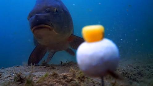 钓鱼的时候,鱼在水里是怎么上钩的?男子用水下摄像机记录全过程