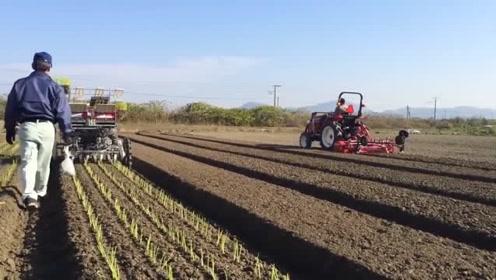 有趣的种植机器,效率比人工高太多