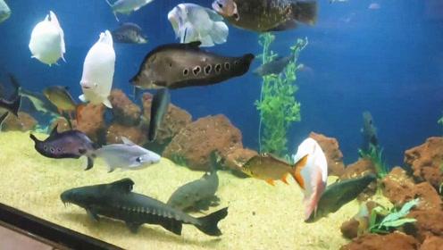 精心喂养的一大缸宝贝宠物鱼,靠近一瞅,我猜你会被彻底吸引住