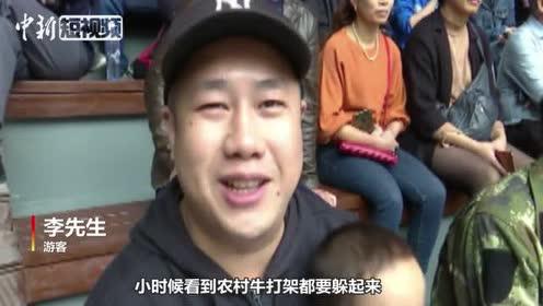 """20头牛角逐超级牛王争霸赛""""牛魔王""""为主人争得5万奖金"""
