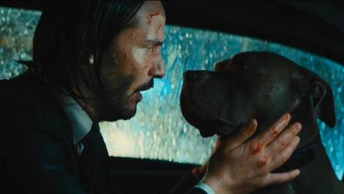电影:劫匪杀了一条狗,没想到主人是王牌杀手,千里追杀寻仇手刃仇敌!