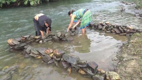 用石块堆成小陷阱,看似没啥用,结果却有大鱼自投罗网,感觉真牛
