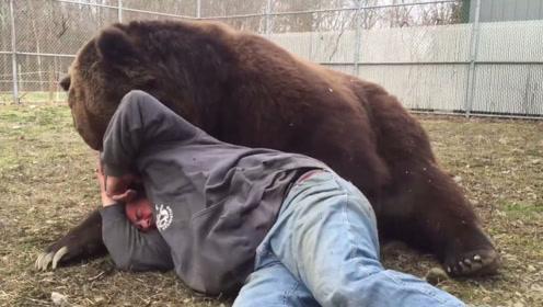 男子躺在棕熊怀里睡觉,下一秒意外发生,网友:性情难测啊!