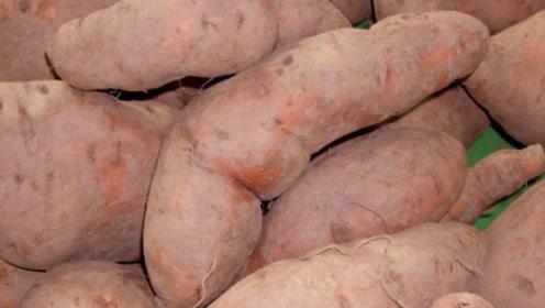 红薯好吃难保存!教你一个窍门,放一年都不腐烂发芽,越放越甜