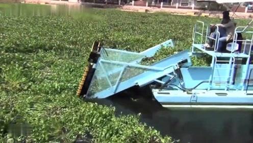 老外发明的水葫芦清理机,原本10个人的活,现在一台机器就解决