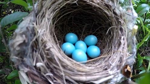鸟巢都是露天的,遇到大雨时怎么办?看完让人心酸