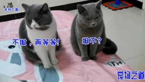 全家六只肥猫一只比一只胖,铲屎官还经常给加餐,吃前要按铃