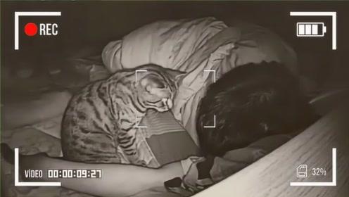 主人长期和猫睡一起,有一天查看监控时,发现奇怪的画面!
