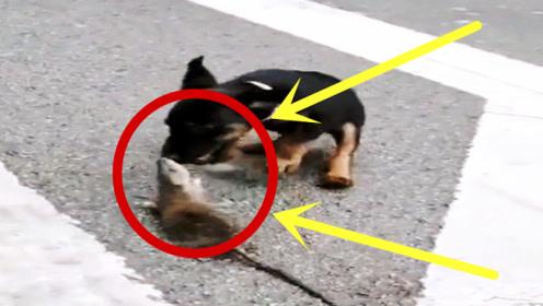 """狗子当街""""翻车"""",被老鼠玩弄于股掌,简直难以置信!"""