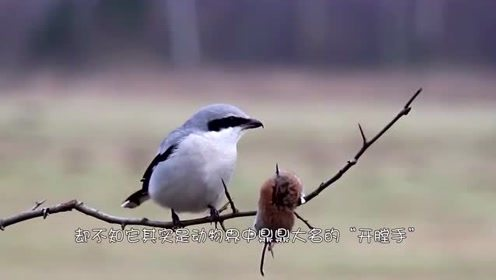 小伙抓住了一只可爱的小鸟,让它没想到的是,它竟如此凶残