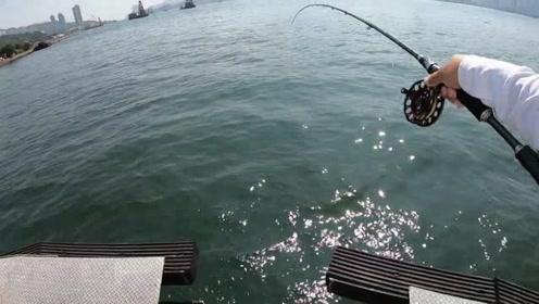 前打钓鱼,奇怪的鱼讯,有鱼上岸就好