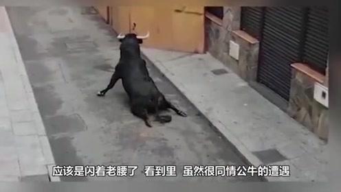 公牛走货车卸货踏板时, 脚下突然一滑掉了下去, 脊骨直接被摔断了