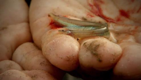 """世界上""""最可怕""""的鱼,它不仅会钻进人体内,就连食人鱼都害怕它"""